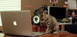【ニャンコの覚醒】ある日突然フォースの力を身につけた猫が暴れまくる