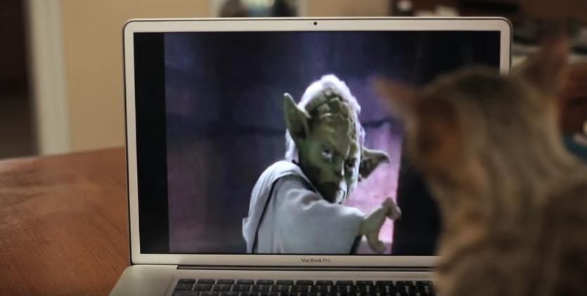 【ニャンコの覚醒】ある日突然フォースの力を身につけた猫が暴れまくる 画像3