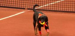 テニスの試合にボールドッグ登場!元捨て犬達がブラジルOPで大活躍
