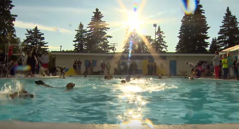 飼い主と一緒に水遊び!ドッグプールに大喜びする犬たち 画像1