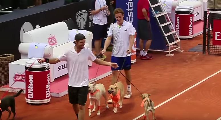 テニスの試合にボールドッグ登場!?元捨て犬がブラジルOPで大活躍 画像2