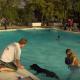 飼い主と一緒に水遊び!ドッグプールに大喜びする犬たち