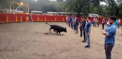 危険すぎる実験! 暴走する雄牛を前に学生たちが直立不動!