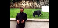 ネコ科の動物に背中を見せてはいけない…! 背後から襲いかかる黒豹!