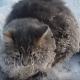 【極寒のロシア】足が凍りついて地面に固まってしまったネコを救出!