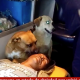 【感動】救急車にも乗り込む! 倒れて運ばれていく主人から絶対に離れなかった犬たち!