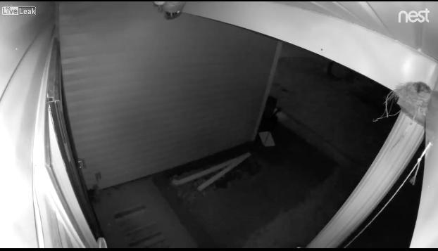 【弱肉強食】玄関に巣を作った鳥の雛が全滅……原因を監視カメラで確認してみると……