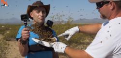 「ミツバチはむやみに人を襲わない」検証してみた結果、大変なことに……!!