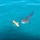 【熾烈な攻防】サメの攻撃を何度も防いだウミガメの戦術とは……!?