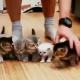 【Twitterで話題】子猫を一列に並べるのがいかに難しいかわかる動画【ほか一本】
