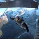 【RedBull】飛行中のセスナに文字通り「飛び乗る」神業が衝撃的すぎる!!