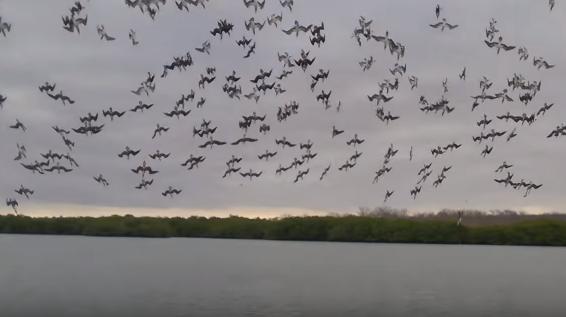 ウミドリの大群が一斉に水面に突っ込む狩りの瞬間が壮絶!!