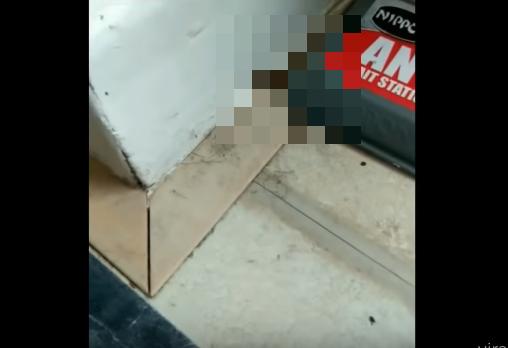 【UMA】これはツチノコ!? イギリスの民家で撮影された未確認生物……!?
