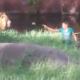 【衝撃映像】酔っぱらった男がライオンの檻に侵入してしまった結果……