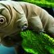 これが地球上最強の生物だ! クマムシの生態を見てみよう!