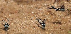 本当に蝶!? まるで空を泳ぐように飛ぶアオスソビキアゲハが美しい……!