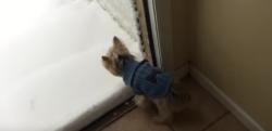 【初雪】「なんだよこれ……」そんな声が聞こえてきそうな初めて雪を見た犬の反応