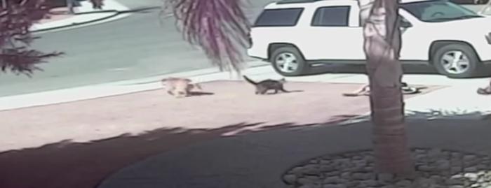 イヌに襲われた男の子を全力で助けるネコが勇敢すぎる……!