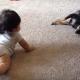 【胸キュンが止まらない】ワンコと赤ちゃんの初めての触れ合いにほっこりする