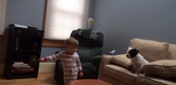 【ほっこり動画】男の子がボールを投げても微動だにしないワンちゃん