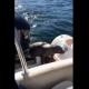 シャチの群れに捕食されかけていたアザラシ、通りかかった人間のボートに逃げ込む!