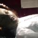【オカルト】奇跡? メキシコの聖堂で300年前のミイラが目を開いたその瞬間の映像!
