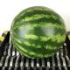 【実験】強靭なシュレッダーにいろんな野菜を置いてみると……!?