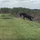 【VS ワニ】ブチ切れた馬がアリゲーターに襲いかかる瞬間……!【他一本】