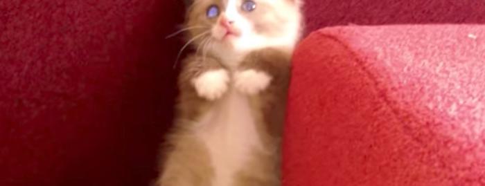 可哀想だけど可愛すぎる! 掃除機に怯える子猫がぬいぐるみにしかみえない!【他一本】