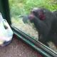 【ここに注いでくれ】賢すぎる! 客に指示を与えてジュースを飲むチンパンジー!
