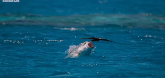 【GT】凄まじい! 巨大魚が飛び上がって鳥を捕食する瞬間……!!