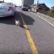 【Twitterで話題】車道で逃げ惑う柴の子犬を助けた女子ライダー!