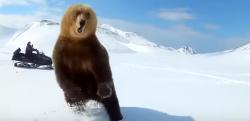 スノーモービルで執拗に追いかけられたクマ、ついにブチギレる