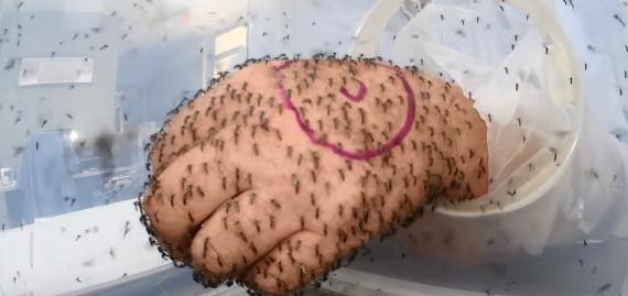 【検証】虫よけ剤の効果を数百匹の蚊が飛ぶ箱の中で試してみた結果!!