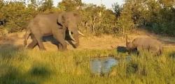 【決定的瞬間】野生動物最強は誰だ! 怒れるゾウ vs サイ