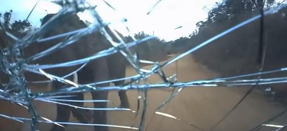 【衝撃】サファリでゾウに襲われる瞬間を捉えた映像! 一瞬でフロントガラスが……