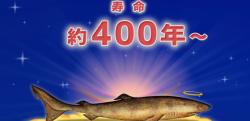 【雑学】地球上で最も長寿な生き物は? 万物の寿命