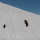 雪の絶壁を登る親子グマ! しかし子グマは傾斜に負けて滑り落ちてしまう