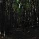 【洒落怖】背筋が凍る衝撃の怖さ……2人の小学生が暗い竹林の小屋で見たものとは……『竹林で』